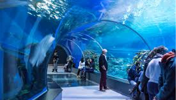 Blue Planet viewing tunnel for Sharks, Rays and all the fishes